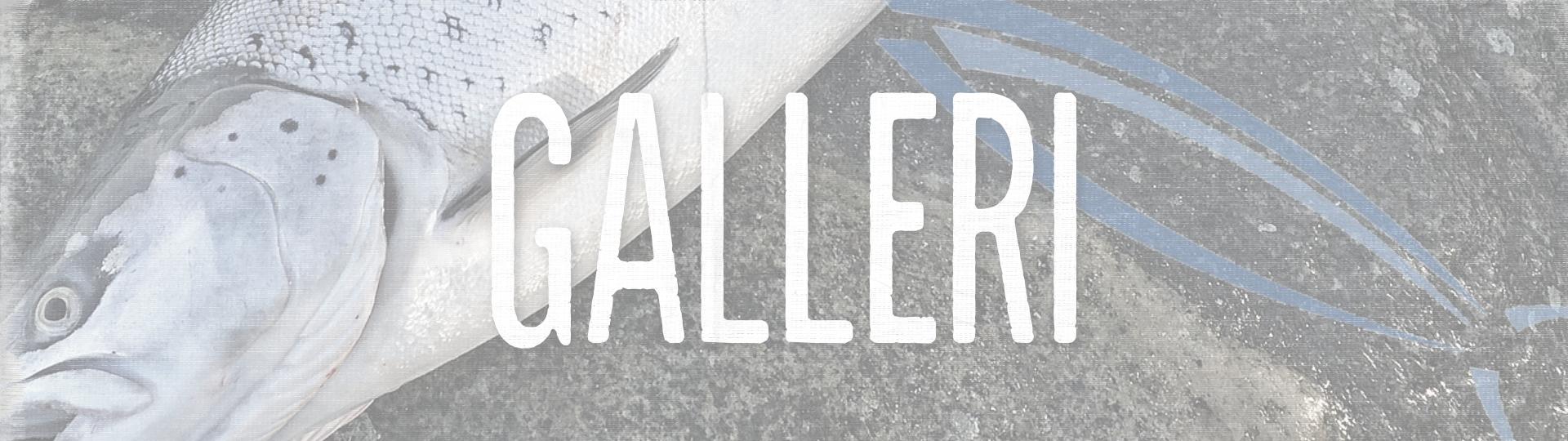 Galleri_Banner
